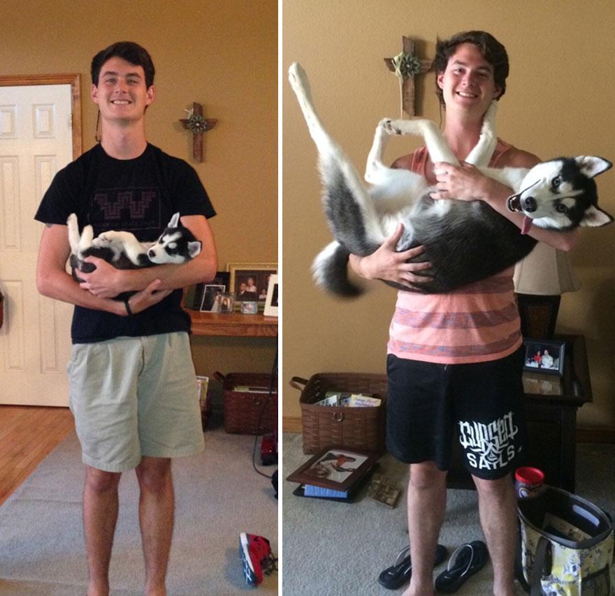 Fotos antes e depois de cães (1)