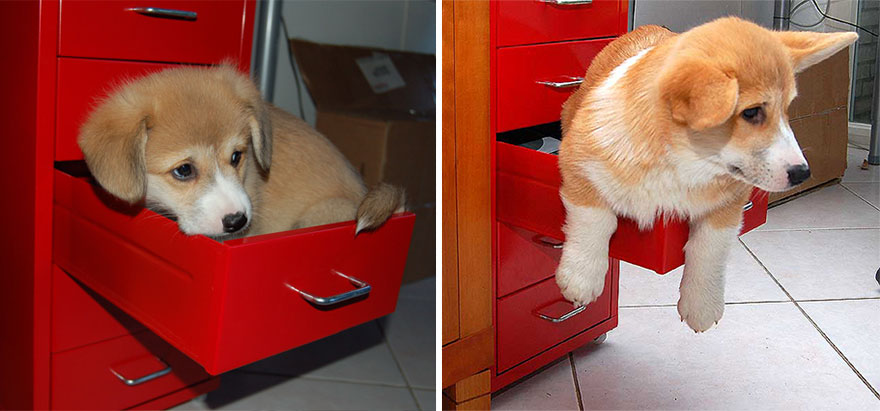 Fotos antes e depois de cães (13)