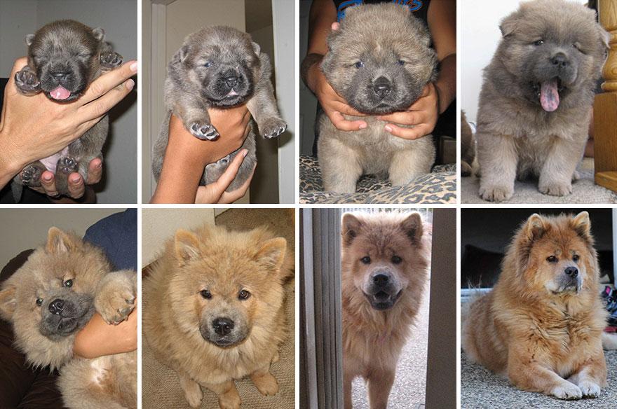 Fotos antes e depois de cães (14)