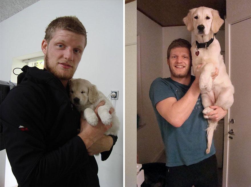 Fotos antes e depois de cães (16)
