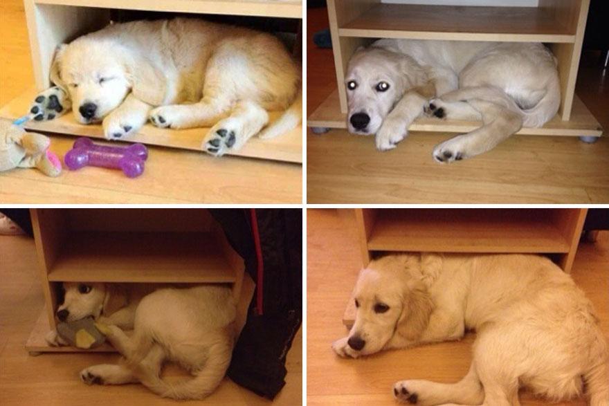 Fotos antes e depois de cães (17)