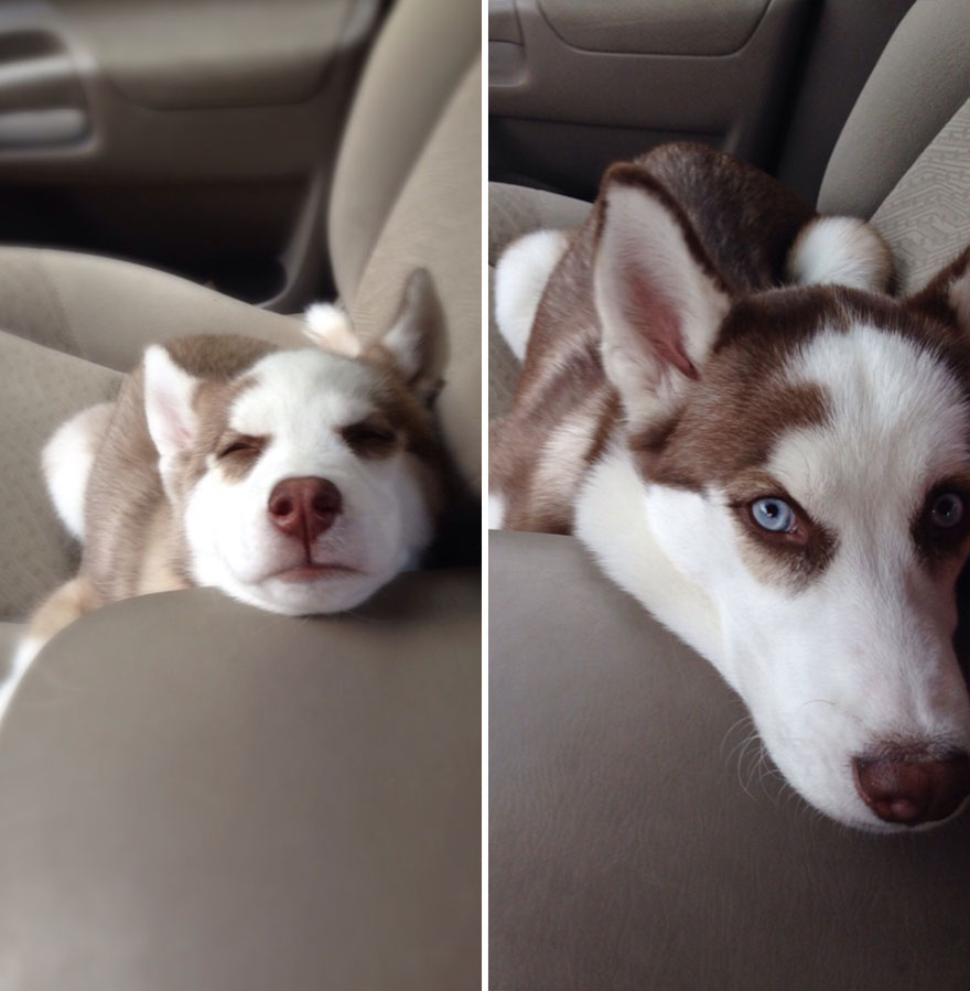 Fotos antes e depois de cães (18)