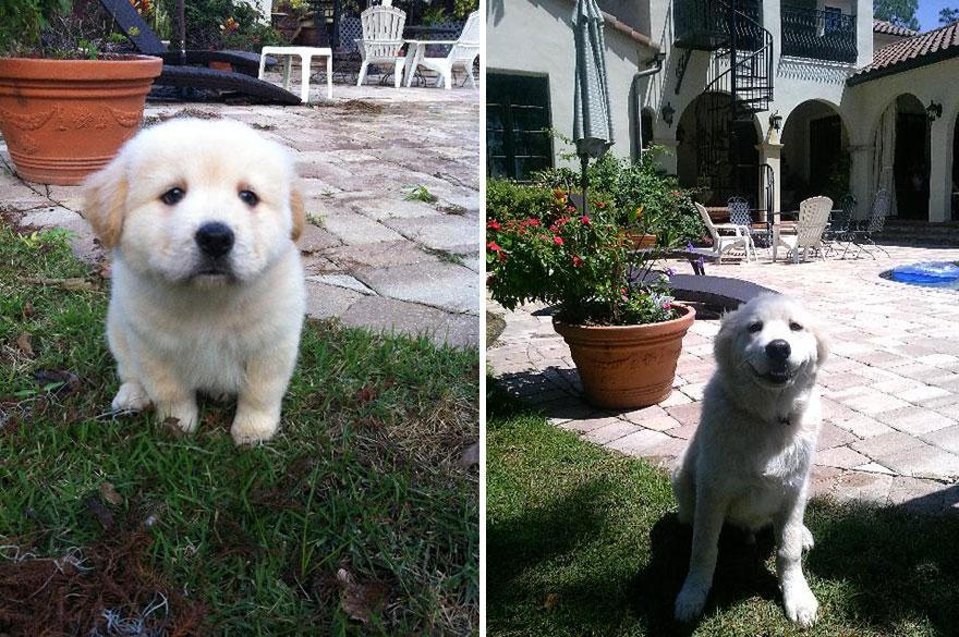 Fotos antes e depois de cães (19)