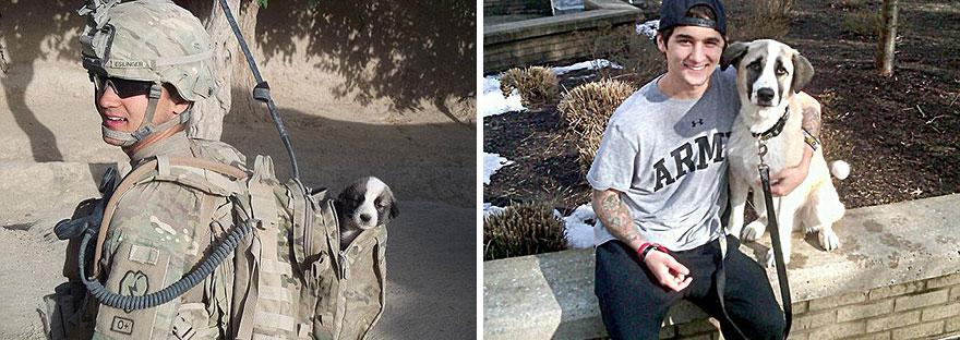 Fotos antes e depois de cães (20)