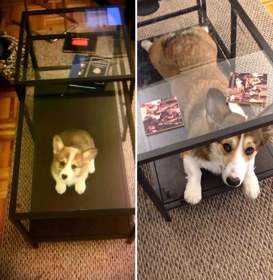 Fotos antes e depois de cães (21)