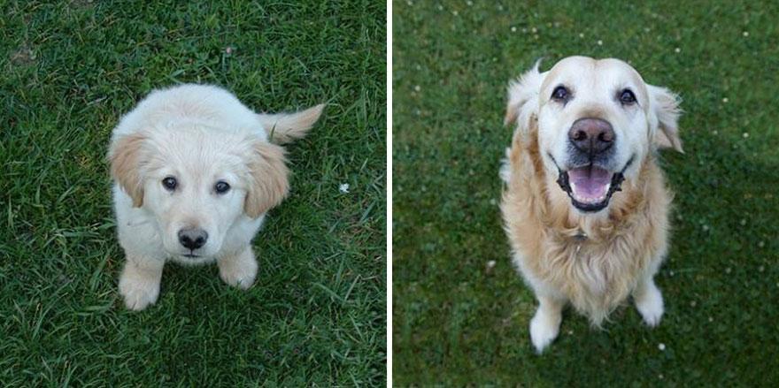 Fotos antes e depois de cães (4)