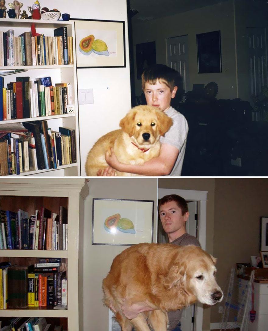 Fotos antes e depois de cães (7)
