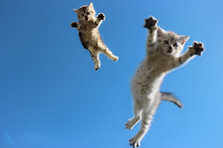 Gatos pulando como Ninjas (12)