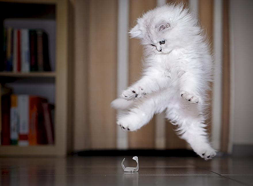 Gatos pulando como Ninjas (13)