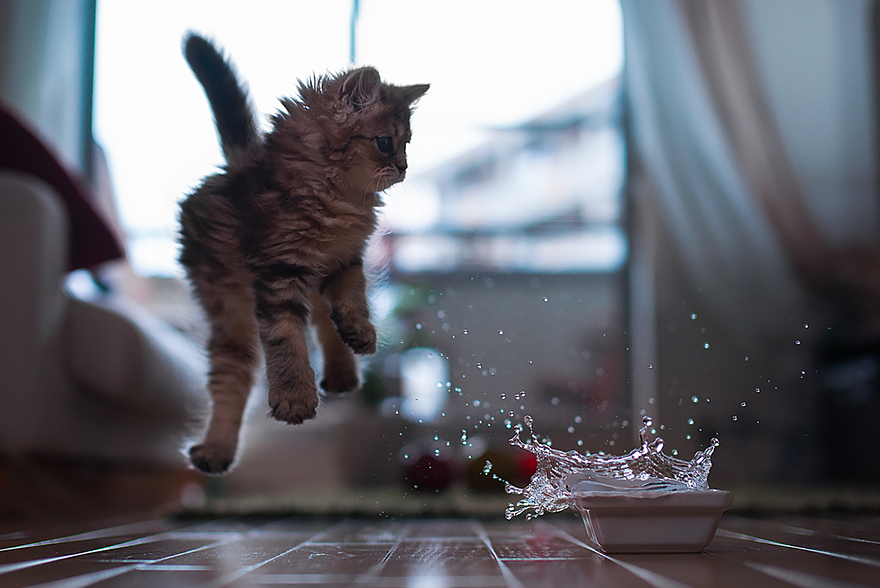 Gatos pulando como Ninjas (2)