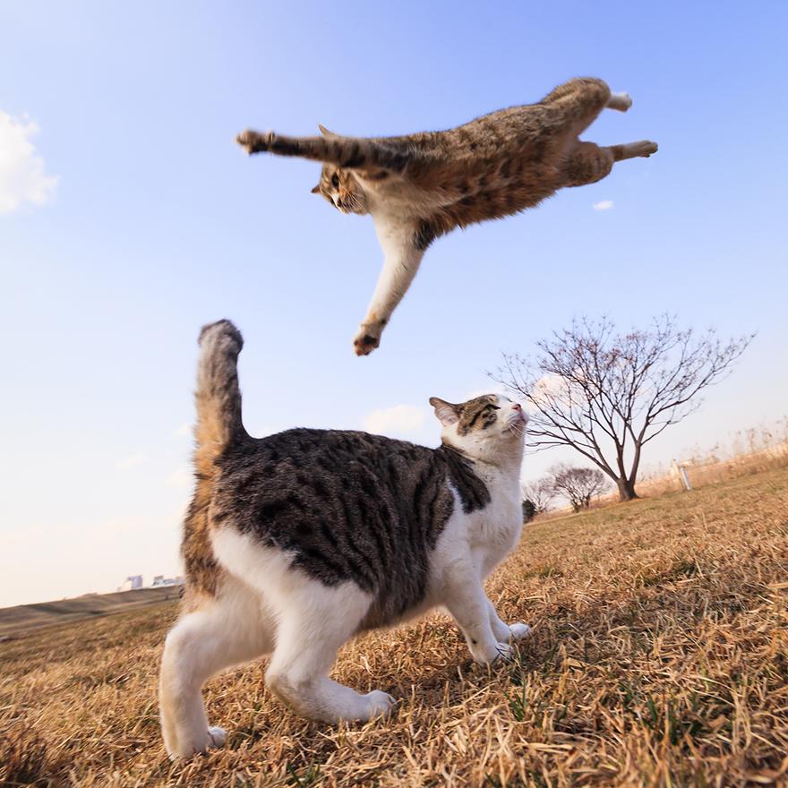 Gatos pulando como Ninjas (3)