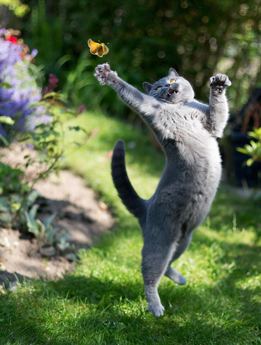 Gatos pulando como Ninjas (4)