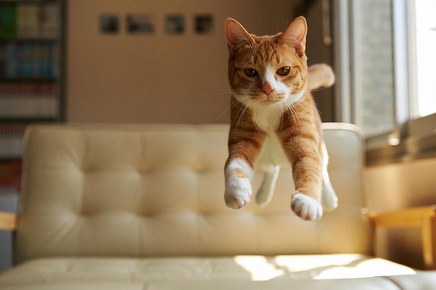 Gatos pulando como Ninjas (5)