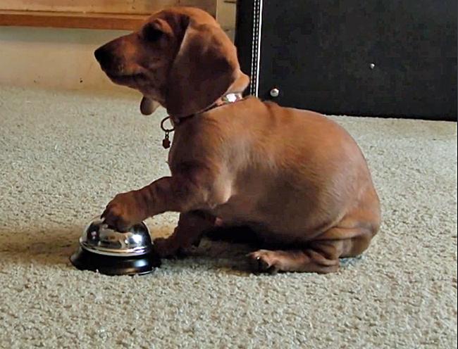 Humano tenta treinar cachorrinho mas as coisas ficam descontroladas