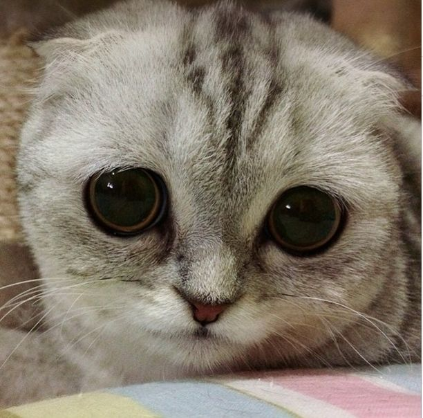 Little-P-é-o-gato-mais-triste-do-mundo-Blog-Animal (28)
