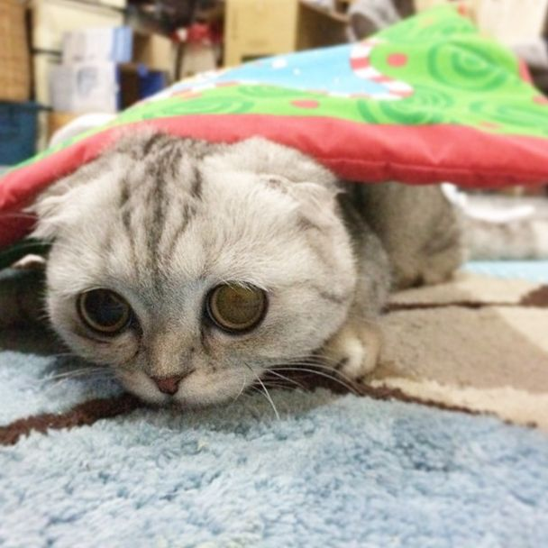 Little-P-é-o-gato-mais-triste-do-mundo-Blog-Animal (30)