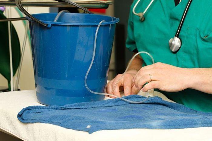 Peixe-passa-por-cirurgia-para-remover-tumor-cerebral-Blog-Animal (5)