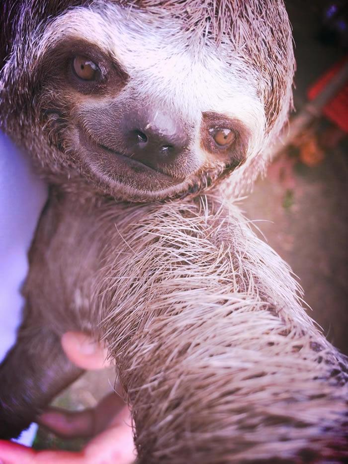 Selfies_engraçadas_de_animais - Blog_Animal (1)