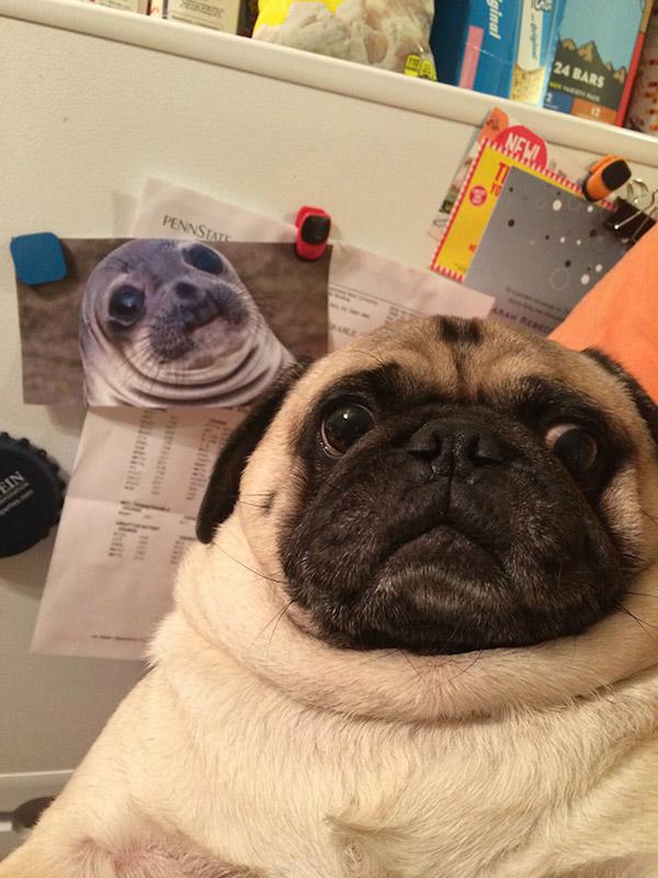 Selfies_engraçadas_de_animais - Blog_Animal (3)