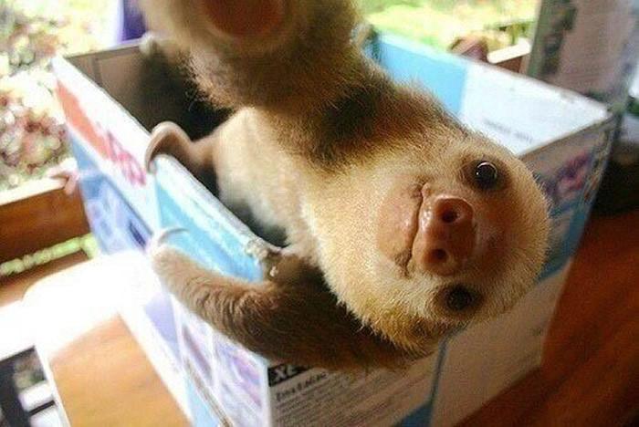 Selfies_engraçadas_de_animais - Blog_Animal (4)