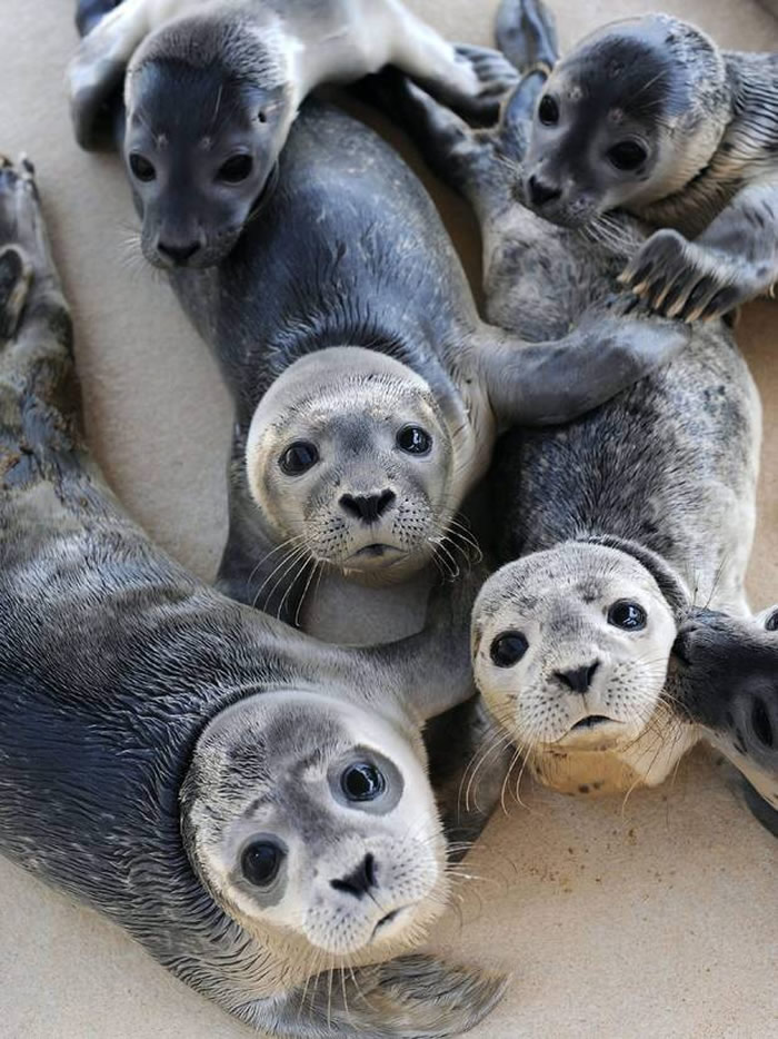 Selfies_engraçadas_de_animais - Blog_Animal (5)