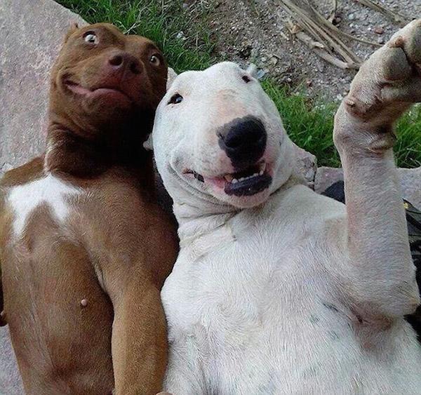 Selfies_engraçadas_de_animais - Blog_Animal (6)