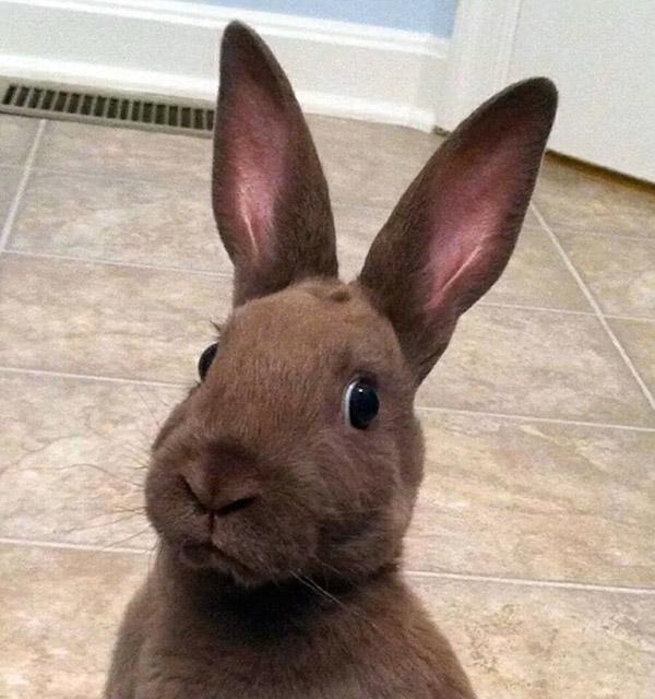 Selfies_engraçadas_de_animais - Blog_Animal (7)