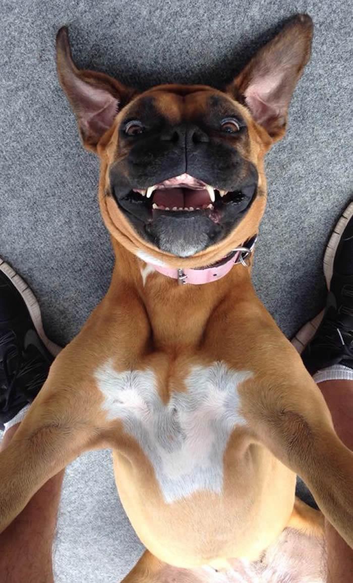 Selfies_engraçadas_de_animais - Blog_Animal (8)