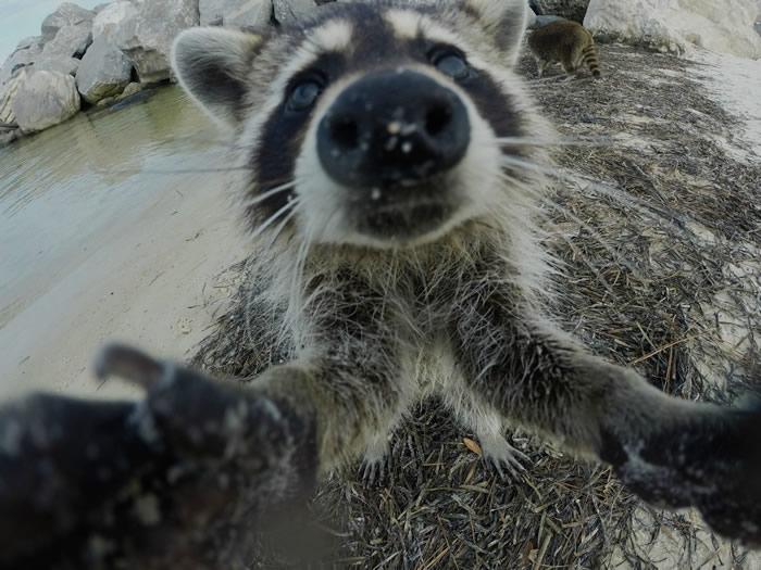 Selfies_engraçadas_de_animais - Blog_Animal (9)