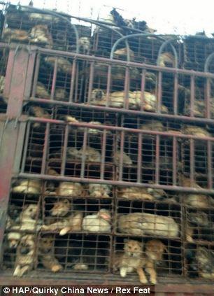 cães-foram-salvos-minutos-antes-de-serem-mortos - Blog-Animal (1)