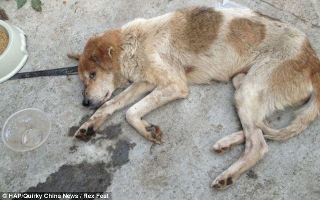 cães-foram-salvos-minutos-antes-de-serem-mortos - Blog-Animal (10)