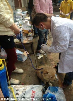 cães-foram-salvos-minutos-antes-de-serem-mortos - Blog-Animal (12)