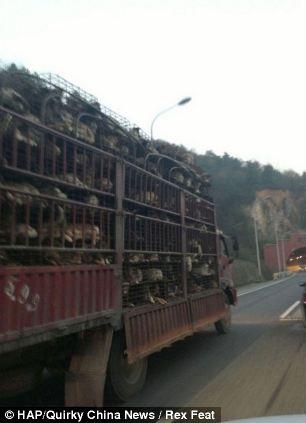 cães-foram-salvos-minutos-antes-de-serem-mortos - Blog-Animal (2)