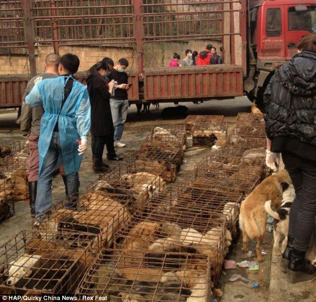 cães-foram-salvos-minutos-antes-de-serem-mortos - Blog-Animal (5)