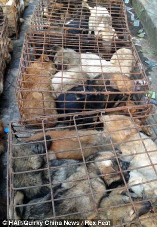 cães-foram-salvos-minutos-antes-de-serem-mortos - Blog-Animal (7)