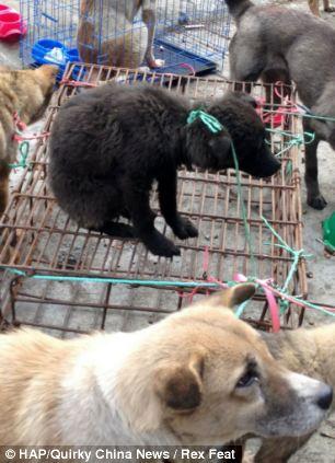 cães-foram-salvos-minutos-antes-de-serem-mortos - Blog-Animal (8)