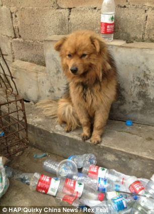 cães-foram-salvos-minutos-antes-de-serem-mortos - Blog-Animal (9)