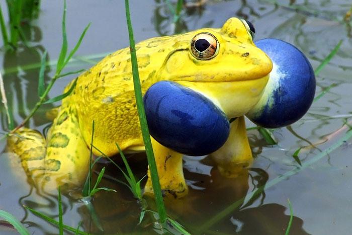 20-Animais-com-cores-curiosamente-diferentes-Blog-Animal (11)