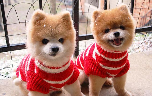 21-animais-gêmeos-que-são-verdadeiras-fofuras-em-dobro-Blog-Animal (10)