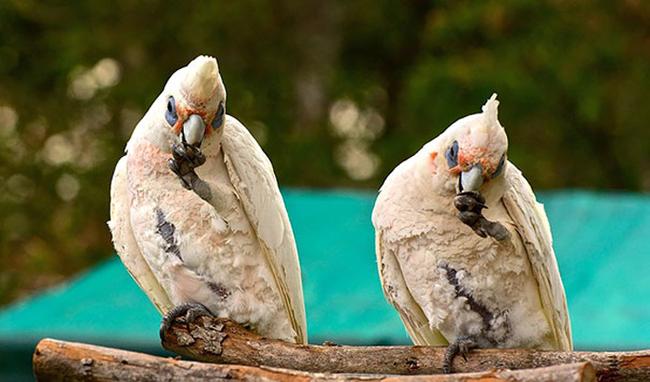 21-animais-gêmeos-que-são-verdadeiras-fofuras-em-dobro-Blog-Animal (11)