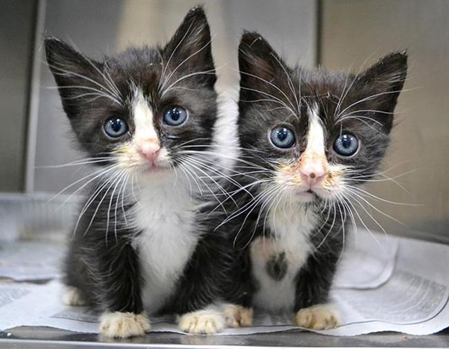 21-animais-gêmeos-que-são-verdadeiras-fofuras-em-dobro-Blog-Animal (13)