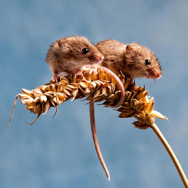 21-animais-gêmeos-que-são-verdadeiras-fofuras-em-dobro-Blog-Animal (14)