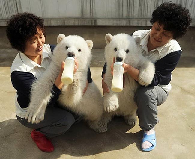 21-animais-gêmeos-que-são-verdadeiras-fofuras-em-dobro-Blog-Animal (17)