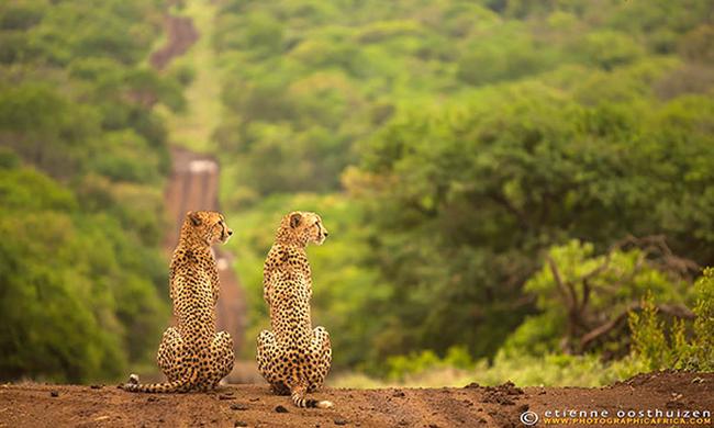 21-animais-gêmeos-que-são-verdadeiras-fofuras-em-dobro-Blog-Animal (18)