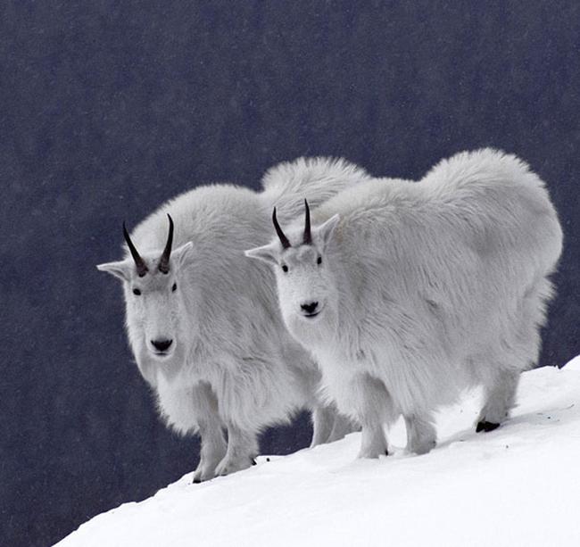 21-animais-gêmeos-que-são-verdadeiras-fofuras-em-dobro-Blog-Animal (6)