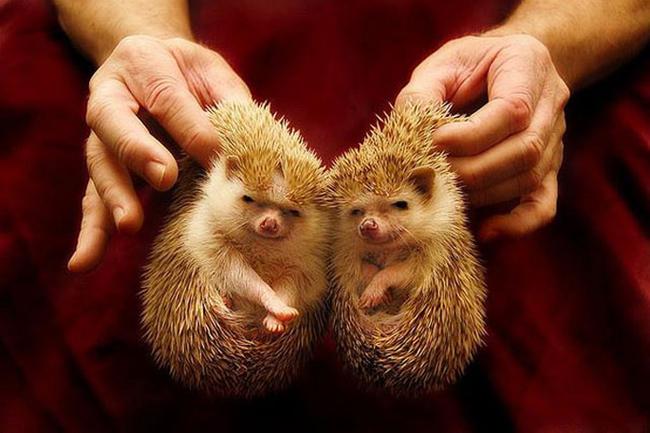 21-animais-gêmeos-que-são-verdadeiras-fofuras-em-dobro-Blog-Animal (7)