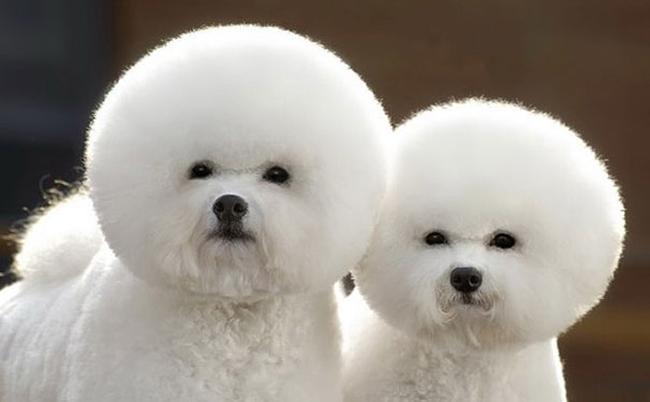 21 animais gêmeos que são verdadeiras fofuras em dobro