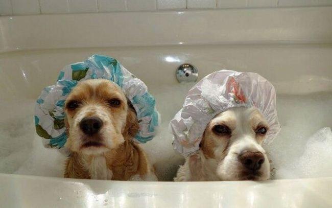22-imagens-que-provam-que-a-hora-do-banho-dos-filhotes-de-cachorro-é-a-mais-fofa-do-dia-Blog-Animal (1)