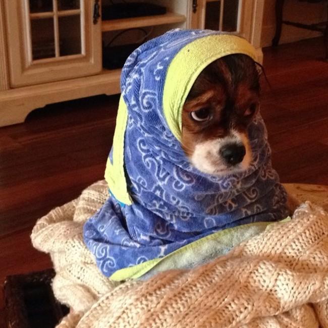 22-imagens-que-provam-que-a-hora-do-banho-dos-filhotes-de-cachorro-é-a-mais-fofa-do-dia-Blog-Animal (11)