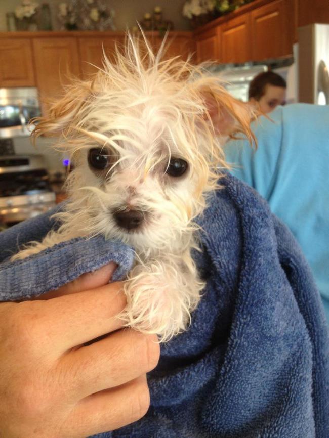 22-imagens-que-provam-que-a-hora-do-banho-dos-filhotes-de-cachorro-é-a-mais-fofa-do-dia-Blog-Animal (2)